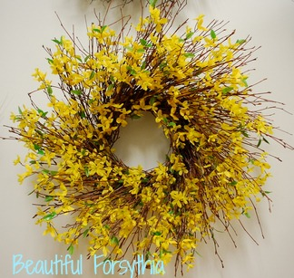Resized forsythia.jpg